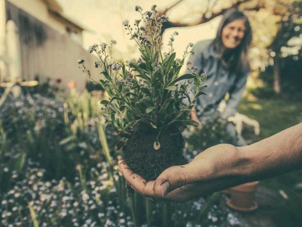 Reducing Back & Neck Pain During Gardening Season